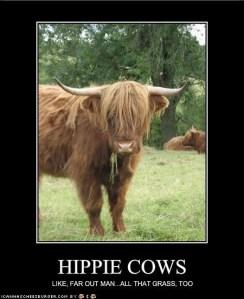 Hippie Cows
